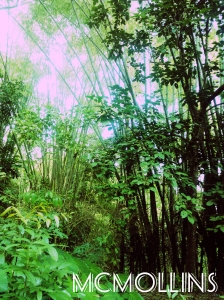 Bamboo Farm at Brgy. Inabasan, Maasin